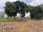 Bán đất Xã Minh Quang, Ba Vì