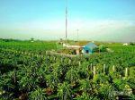 Bán đất tại Xã Hồng Thái - Bắc Bình